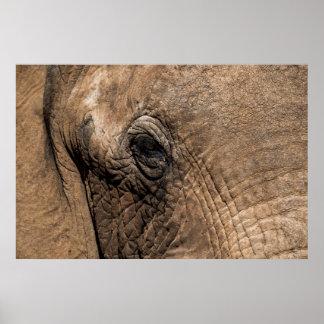 Poster Visage d'un éléphant