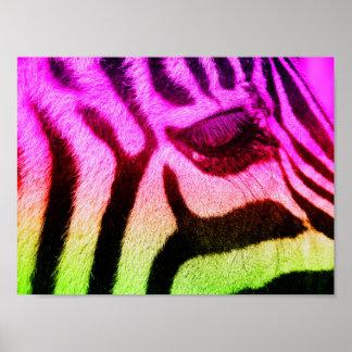 Poster Visage génial coloré de zèbre
