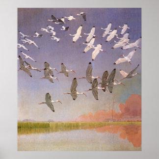 Poster Volée d'IBIS volant au-dessus des marécages,