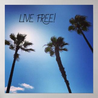 Poster Vraie photo de Cali des palmiers et du ciel bleu