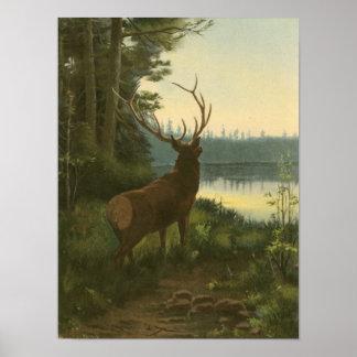 Poster Vue arrière des élans regardant au-dessus d'un lac