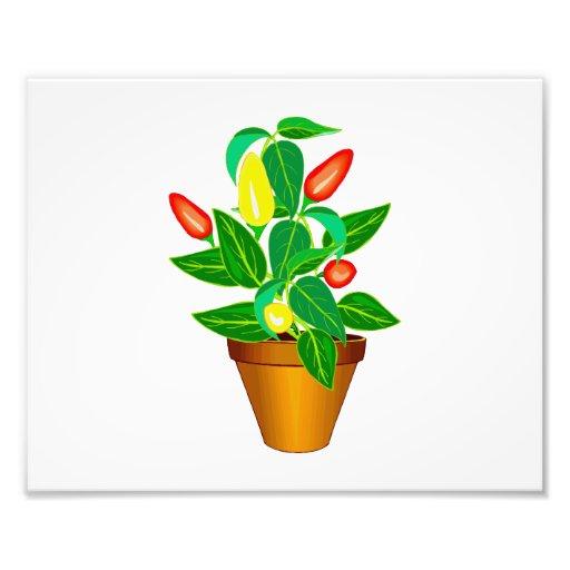 Pot avec le plante rouge et jaune de poivre tirages photo