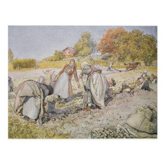 Potatoes de creusement, 1905 carte postale