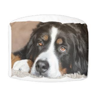Pouf pose de chien de montagne bernese