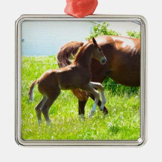 Poulain de bébé de poney de cheval mignon ornement carré argenté