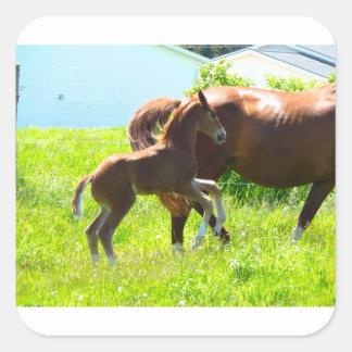Poulain de bébé de poney de cheval mignon sticker carré