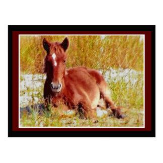 Poulain de cheval sauvage cartes postales