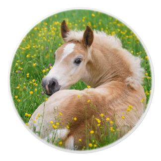 Poulain mignon de cheval de Haflinger dans le Bouton De Porte En Céramique