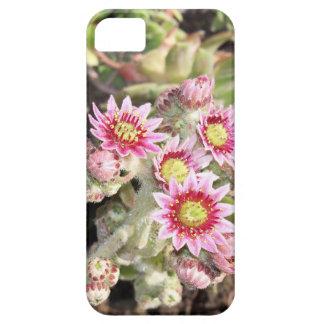 Poules et fleurs de poussins coques iPhone 5