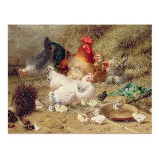 Poules roosting avec leurs poulets carte postale