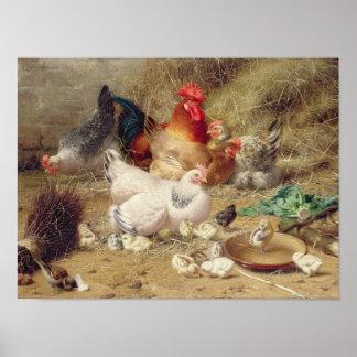 Poules roosting avec leurs poulets posters
