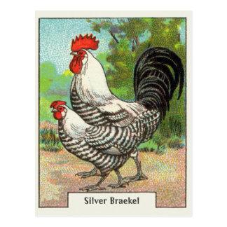 Poulet argenté vintage de Braekel Cartes Postales