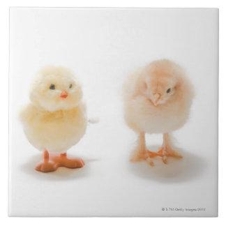Poulet de bébé et faux poulet mécanique grand carreau carré