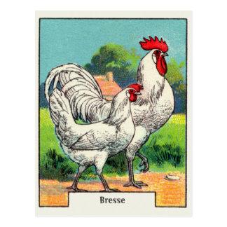 Poulet vintage de Bresse Cartes Postales