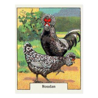 Poulet vintage de Houdan Cartes Postales
