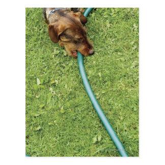 Poursuivez mordre sur le tuyau sur l'herbe et le carte postale