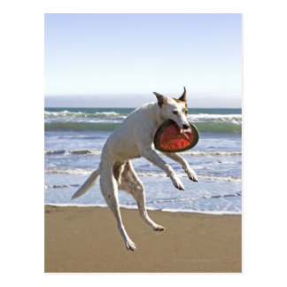 Poursuivez sauter pour attraper un frisbee sur la carte postale