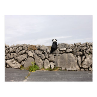 Poursuivez se reposer sur un mur en pierre carte postale