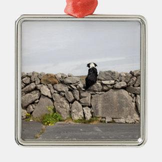 Poursuivez se reposer sur un mur en pierre ornement carré argenté
