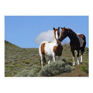 Pousser du nez des chevaux carte postale