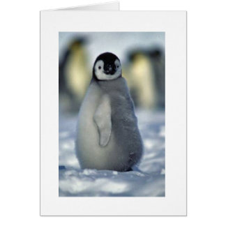 poussin de pingouin carte de vœux
