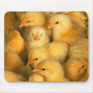 Poussins de bébé tapis de souris