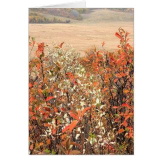 Prairie Buckbrush Carte De Vœux