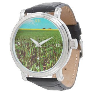 Prairie de graine oléagineuse montre
