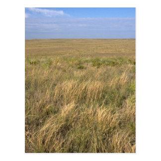 Prairie de prairie à l'est de Sidney, Nébraska Carte Postale