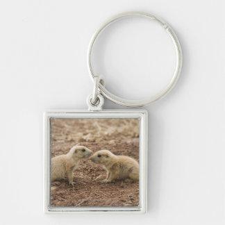Prarie coupé la queue par noir Marmot Porte-clé Carré Argenté