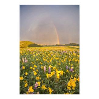 Pré spectaculaire de fleur sauvage au lever de sol photographes