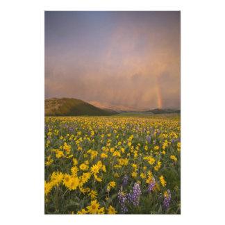 Pré spectaculaire de fleur sauvage au lever de sol photos