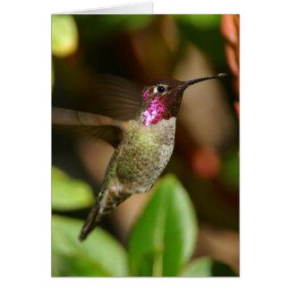 presque - colibri carte de vœux