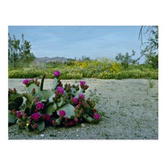 Printemps en fleurs de rose de désert de Sonoran Carte Postale