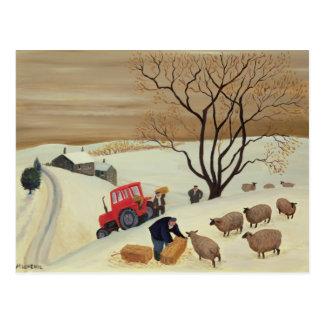 Prise du foin aux moutons par le tracteur carte postale