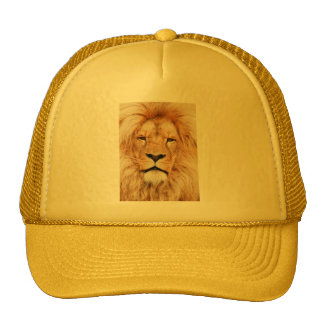 Produits de lion casquettes