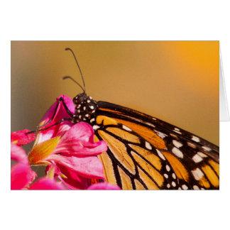 Profil d'un papillon de monarque cartes