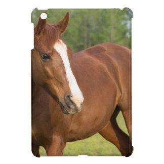 Profil latéral de Brown de cheval Arabe dans le Coques Pour iPad Mini