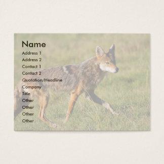 profil ou carte de visite, coyote