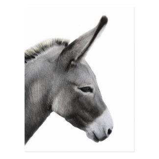 Profil principal d'âne carte postale