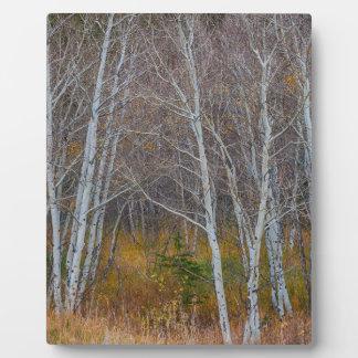Promenade dans les bois plaque d'affichage