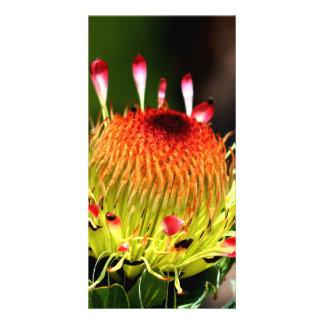 Protea Photocarte Personnalisée