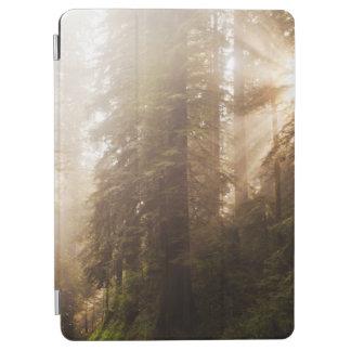 Protection iPad Air Arbres de séquoia en brouillard de matin avec des