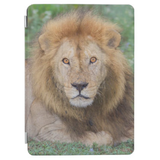 Protection iPad Air Lion masculin se couchant