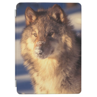 Protection iPad Air Loup gris dans la neige