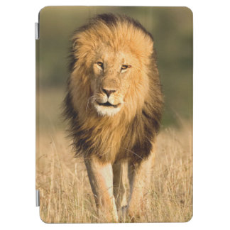 Protection iPad Air Marche masculine de lion