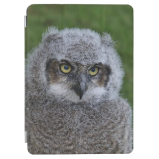 Protection iPad Air Owl_20180215_by_JAMFoto