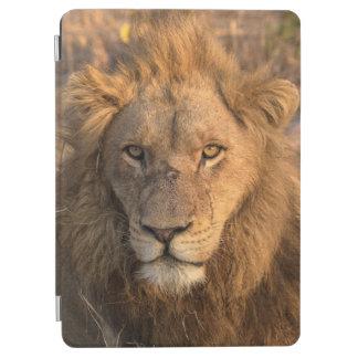 Protection iPad Air Portrait d'un lion masculin