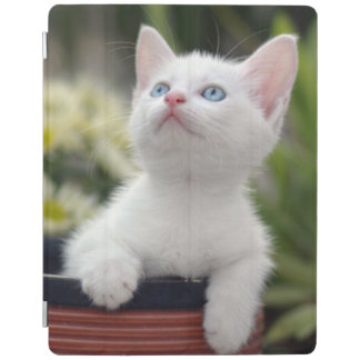 Protection iPad Chaton blanc turc