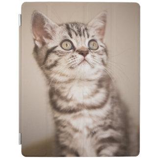 Protection iPad Chaton britannique gris mignon de cheveux courts